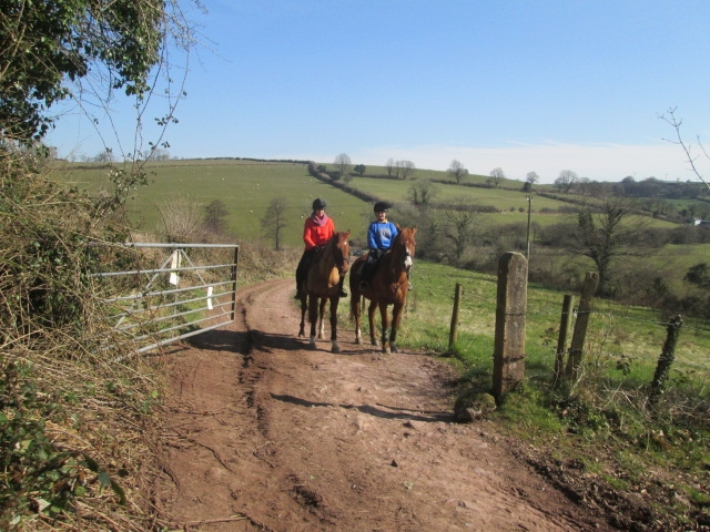 hacking in Laugharne